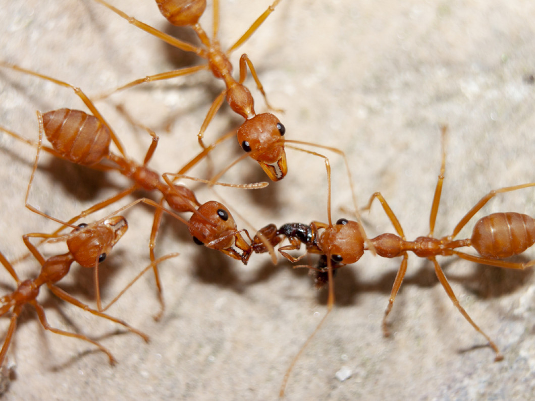 Ants Crawling Around Your Home?